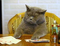 кот и покер